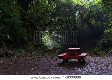 Picnic Bench In The Cloud Forest