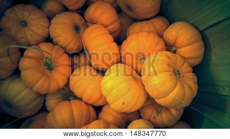 Seasonal pumpkins background