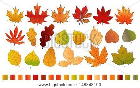 Different color autumn leaves vector collection. Leaves isolated on white with 