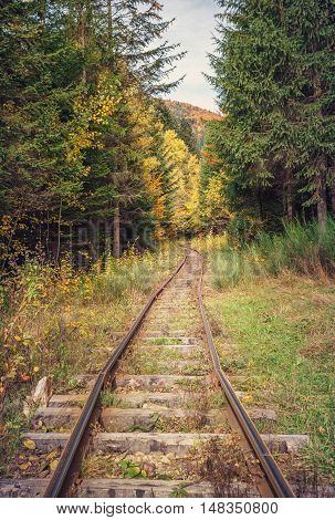 old railway road in beatiful colorful autumn forest