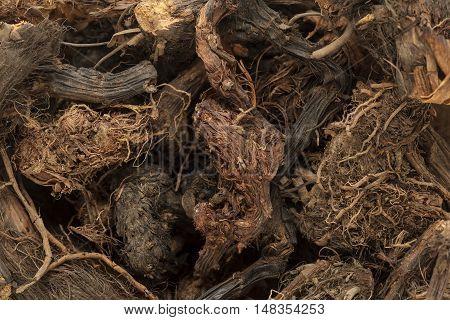 Organic Spikenard (Nardostachys jatamansi) roots. Macro closeup background texture.