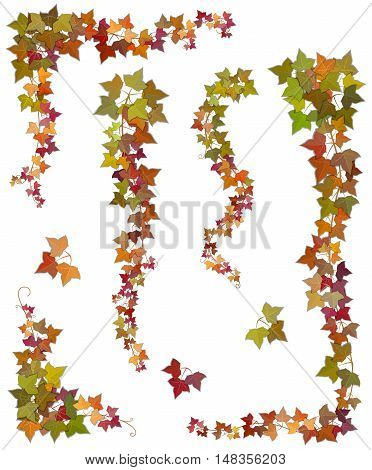 Hanging branches of autumn ivy with green yellow and red leaves. Set of floral decorative elements isolated on a white background.