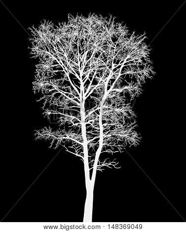 illustration with bare tree isolated on black background