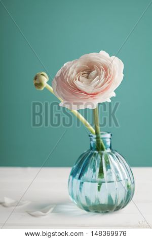 Pink ranunculus in vase against turquoise background. Beautiful spring flower, vintage toning. Retro.