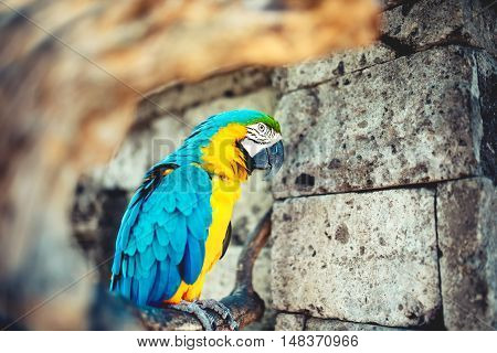 Close-up Portrait Of Wild Parrot, Macaw Parrot In Amazonian Rainforest