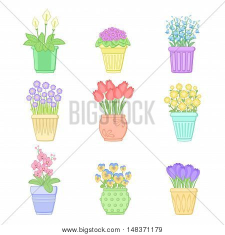 Flowers in pots. Set of spring flowers. Vector illustration isolated on white background.
