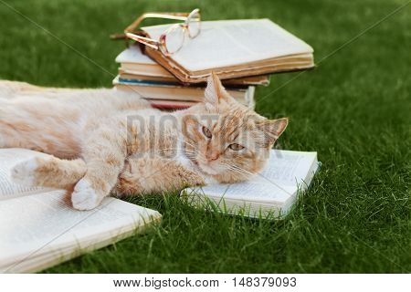 Cute cat with book and glasses lying on green lawn, funny pet. Education and reading concept.
