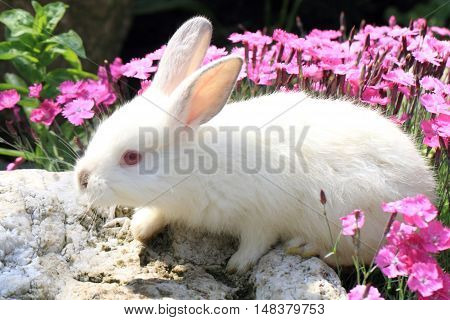 Rabbit In The Violet Flowers