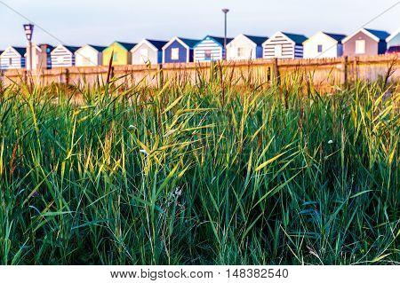 Green Reeds With A Row Of Beach Huts In The Background
