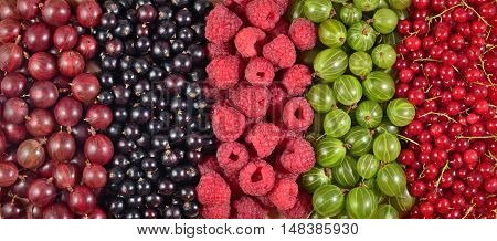 Various Kinds Of Fresh Berries As Background