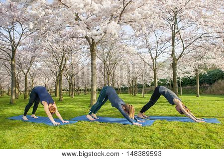 Tree young women practicing essential yoga pose - downward facing dog in a morning park