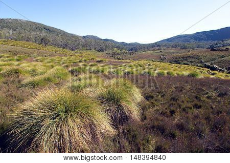 Button Grass Plains