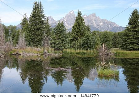 Teton Mountains And Pine Trees Reflecting In Water