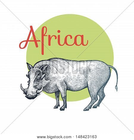 African animals. Warthog. Illustration Vector Art. Style Vintage engraving. Hand drawing.