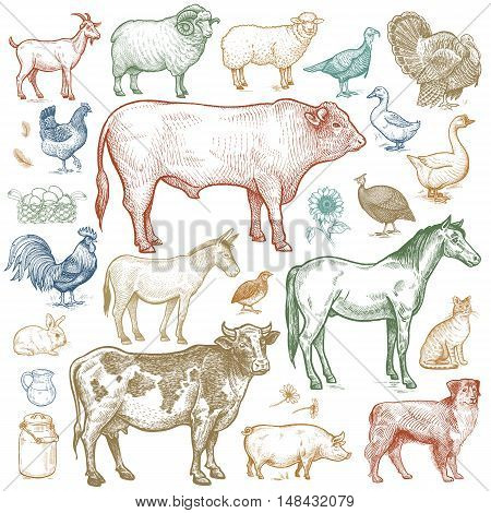 Farm animals set. Vector illustration. Isolated on white background.