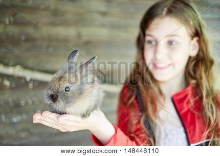 Little girl holds shaggy gray rabbit in hands, focus on rabbit.
