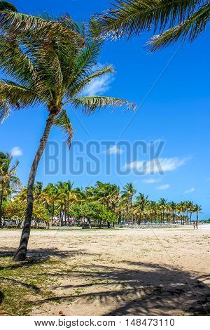 Palms of Lummus Park in South Beach neighborhood of Miami Beach, which served as the backdrop for many films. This beachfront park is one of the most popular destinations in Miami, Florida.