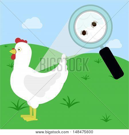 Tick In The Chicken