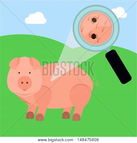 Tick In The Pig