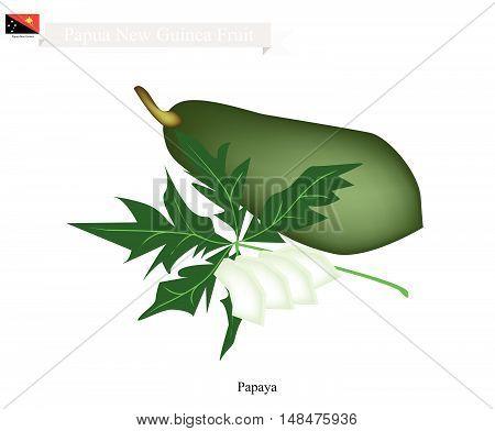 Papua New Guinea Fruit Illustration of Papaya. One of The Native Fruits of Papua New Guinea.