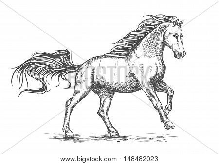 White horse running and stomping sketch portrait. Vector mustang stallion freely gallop rushing against wind with waving mane and tail poster