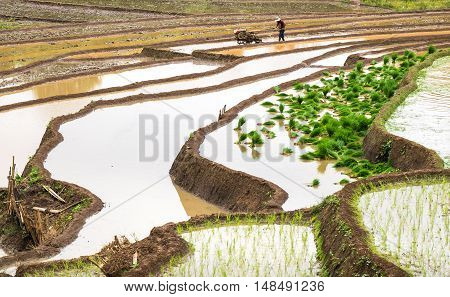 The top north Thailand farmer ploughing a rice paddy.