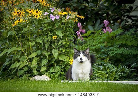 Cat in yard by flowers. A cute cat in the grass by the flower garden.