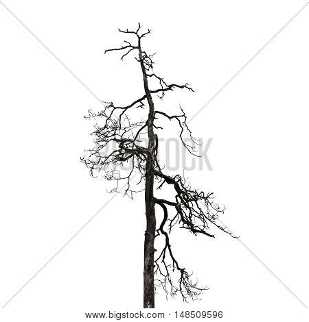 Bare Tree Isolated On White Background