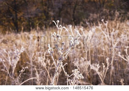 Beautiful Landscape With Morning Frost