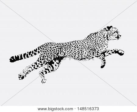 figure running Leopard on a light background