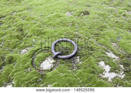 Old Ring In A Tomb