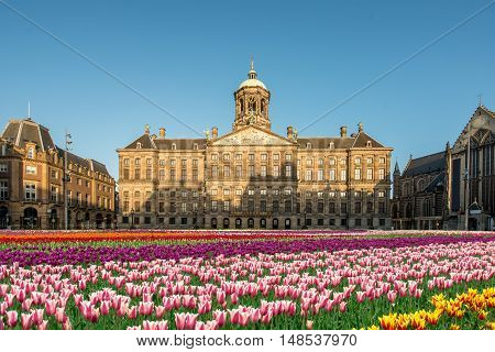 National tulip day at the Dam Square with the Royal Palace on the background in Amsterdam Netherlands.