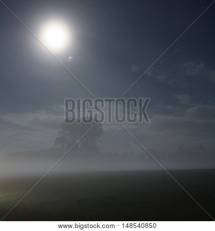 Lonely tree and fog in the moonlit night.