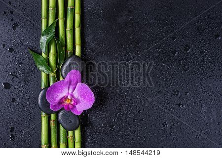 Spa concept with black basalt massage stones pink orchid flower and a few stems of Lucky bamboo covered with water drops on a black background; with space for text