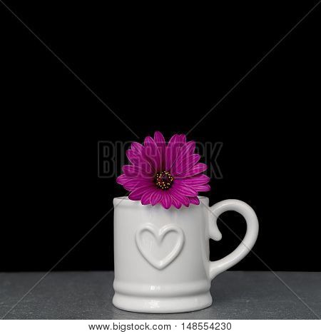pink osteospermum (daisy) in white mug on black background