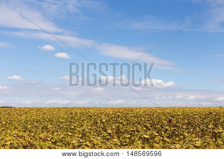 Ripe sunflowers on a background of blue sky, autumn