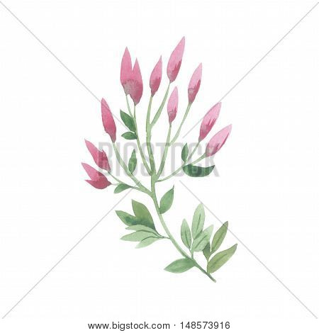 Wildflower lily flower in a watercolor style isolated. Full name of the plant: lily, lilium, lotus, water lily. Aquarelle flower could be used for background, texture, pattern, frame or border.