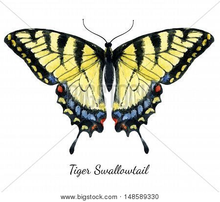 Beautiful image with nice watercolor hand drawn butterfly
