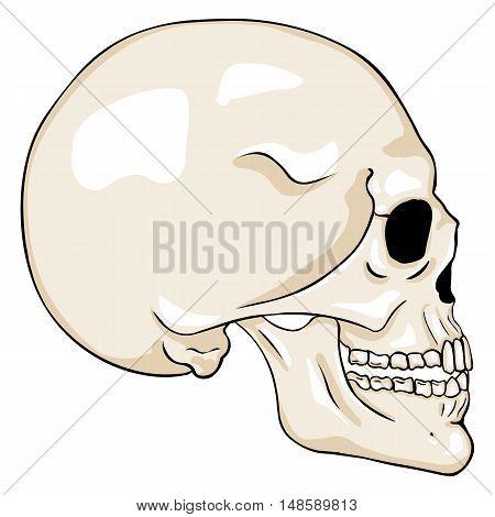 Vector  Cartoon Side View Skull