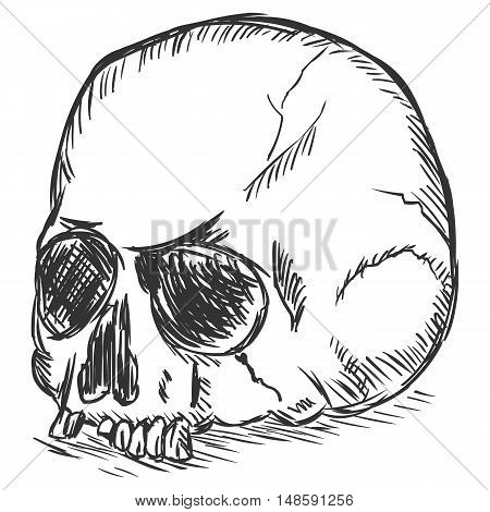 Vector Sketch Illustration - Old Stale Skull