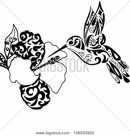 Hiqh qualiti hummingbird and orchid for coloring or tattoo isolated on white background