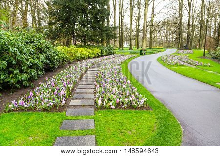Colorful hyacinth and crocus flowers blossom in spring garden