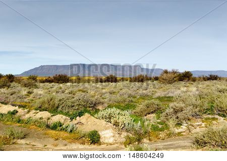 Green Fileds With A Mountain Looking Like Table Mountain In The Background Tankwa Karoo