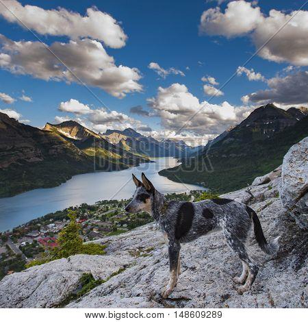Puppy Hiking