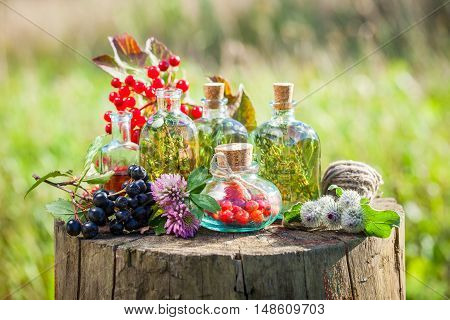 Transparent bottles of tincture healthy herbs and berries on wooden stump outdoors herbal medicine.