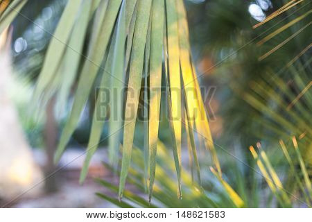 Early morning light reflects on palm leaves.