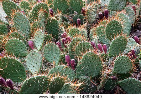 the a kind of thorny green cactus