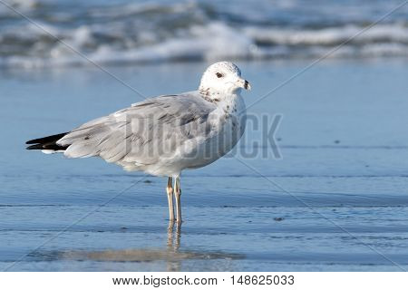 Lone seagull standing on a beach with tide and water coming in