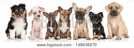 Group Of Puppies On White