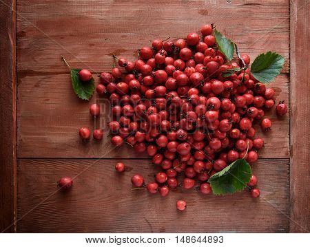 Rose Hip. Briar On Wooden Background
